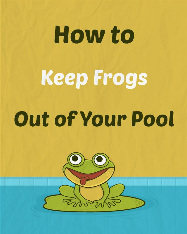 How To Get Rid Of Frogs In Backyard how to keep frogs out of your pool for good | pool maintenance