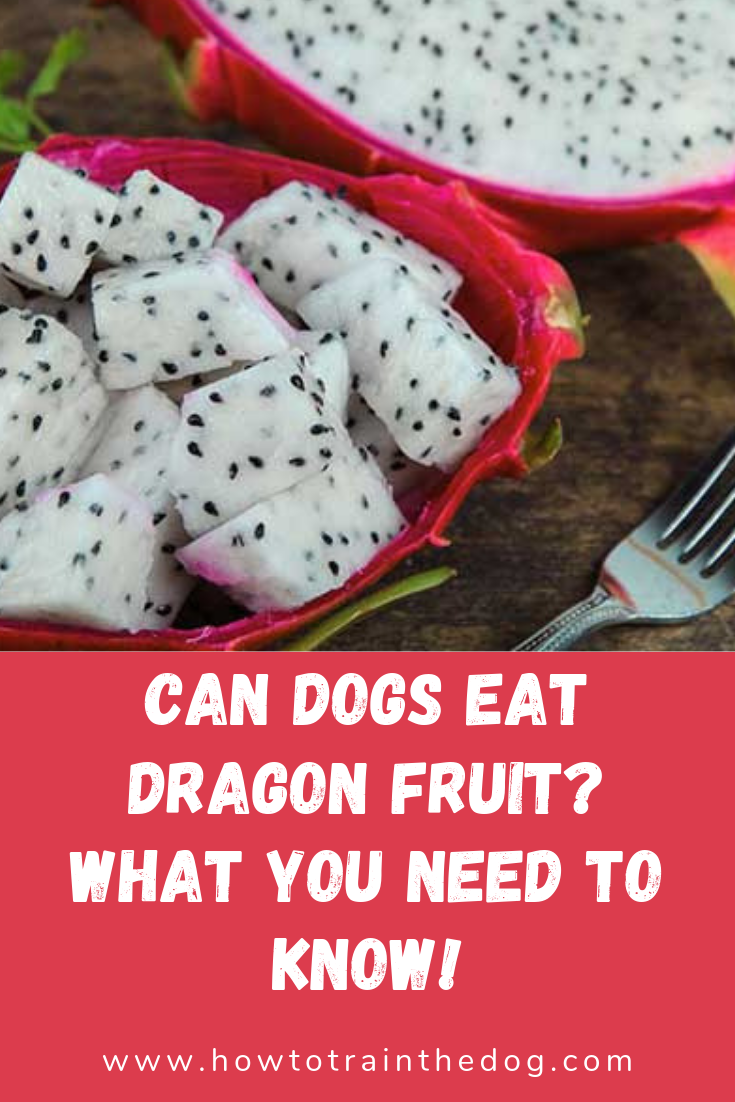 Can Dogs Eat Dragon Fruit? What You