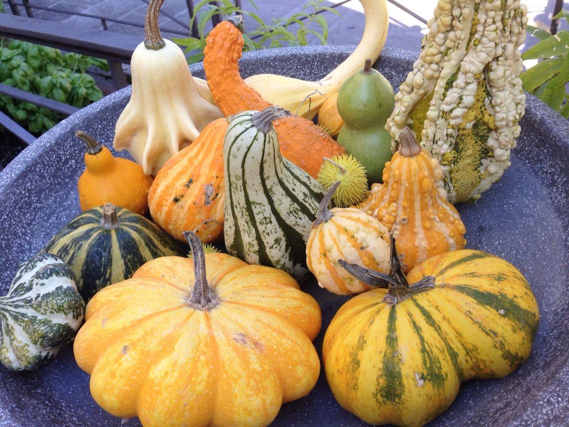 Pumpkins mix