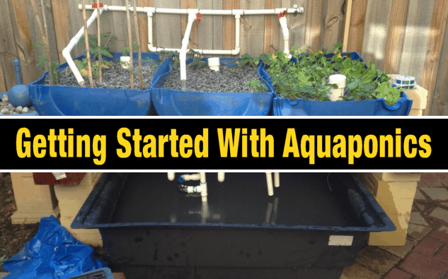 Start Growing Your Own Food Using A Diy Aquaponics System 640 x 480