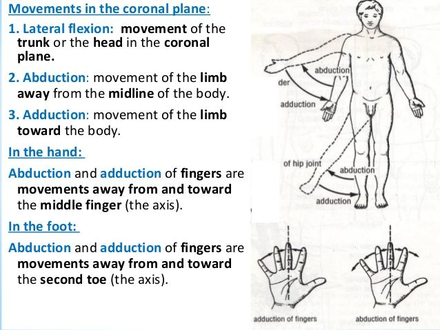 anatomical movement terms - Google Search | CNA Training | Pinterest ...