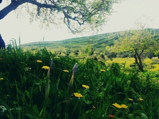 صور فصل الربيع في عصيرة القبلية نابلس فلسطين Natural Landmarks Landmarks Nature