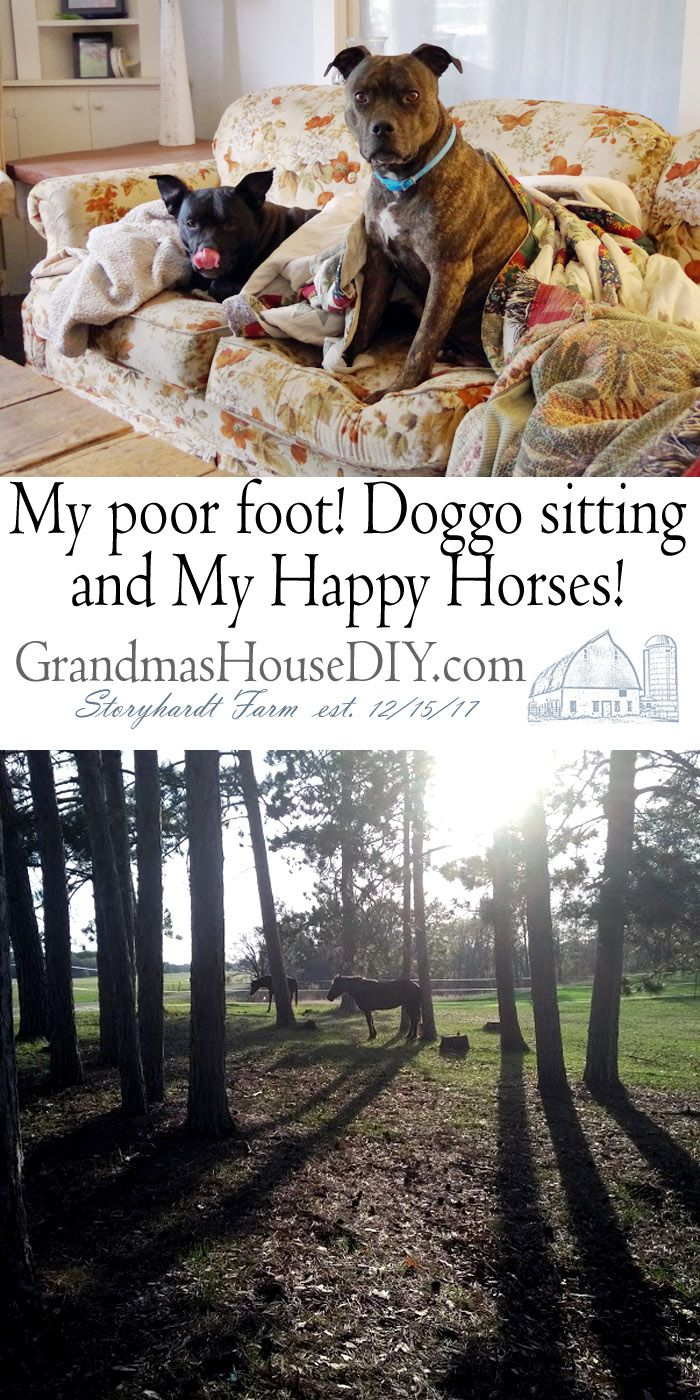 My poor foot! Doggo sitting for my best friend and my