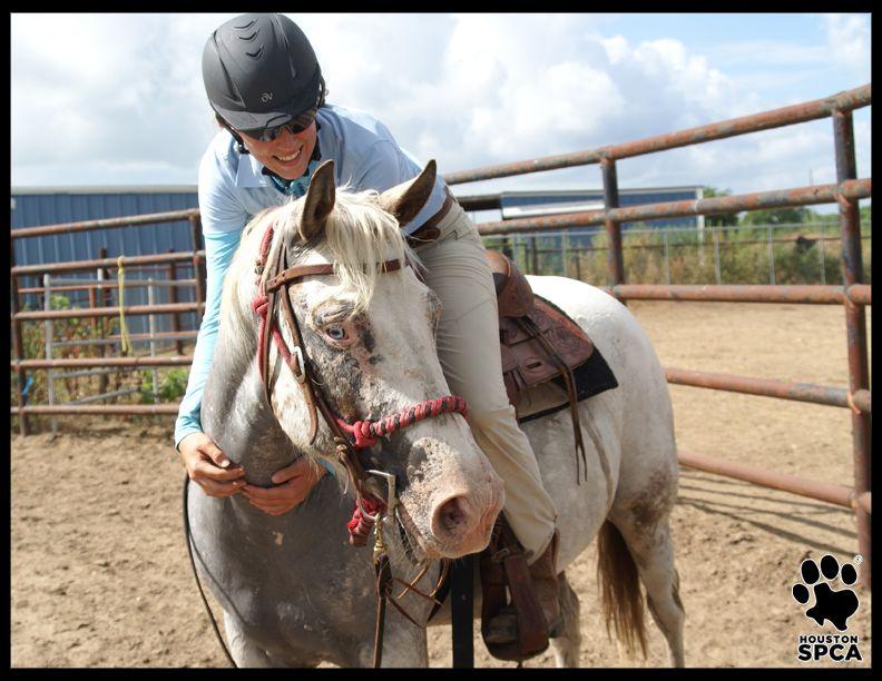 Bryony Houston Spca Horses Canter Vets