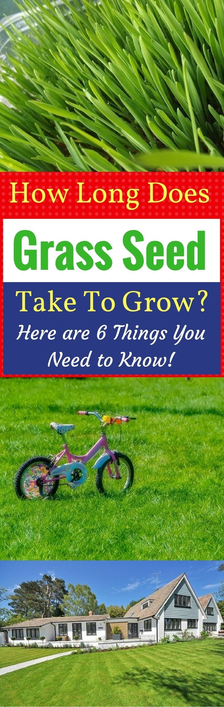 Ever Wonder How Long Does Grass Seed Take To Grow Here Are 6 Things You Need To Know Grass Seed Grass Seeding Lawn