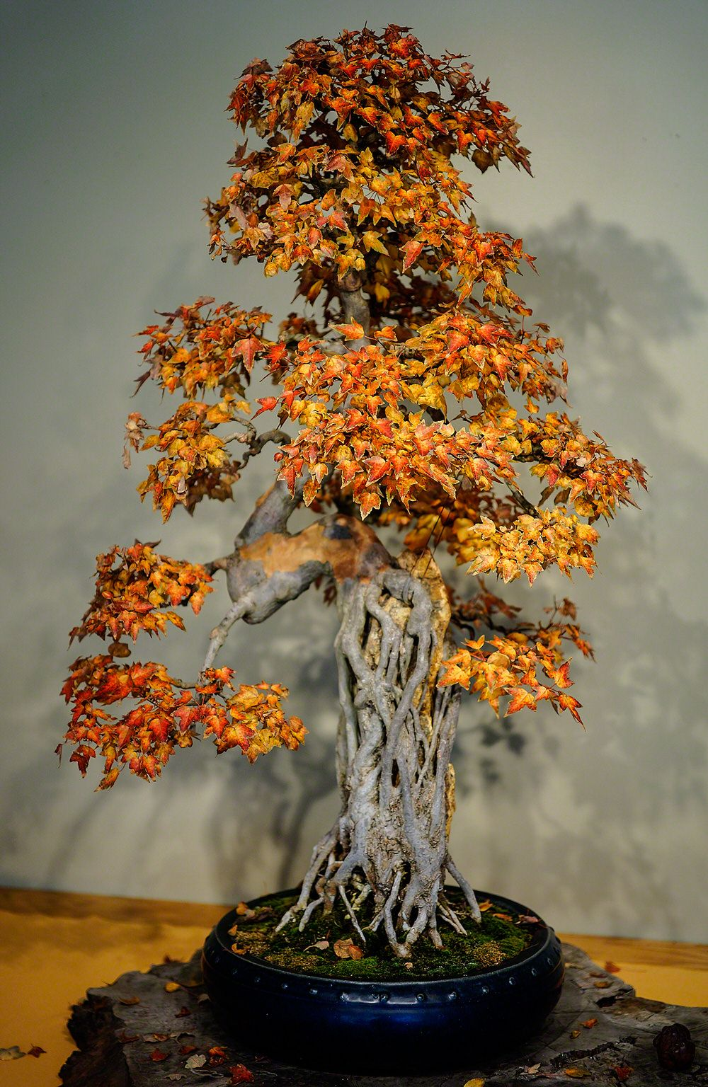 24 Bonsai Trees That Will Change Everything You Thought