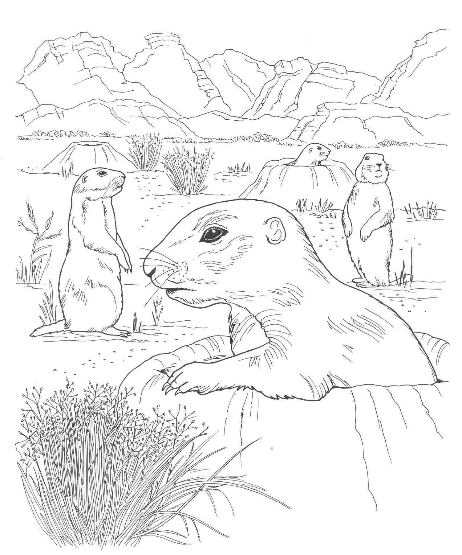 Desert Animals And Plants Coloring Pages Desert Animals Coloring Animal Coloring Pages Farm Animal Coloring Pages [ 1800 x 1500 Pixel ]