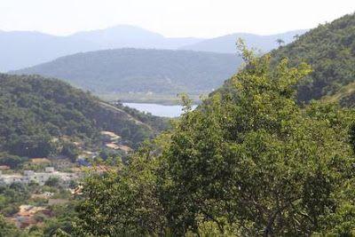 Blog do AXEL GRAEL: Considerada extinta há 18 anos, árvore guarajuba é encontrada em Niterói