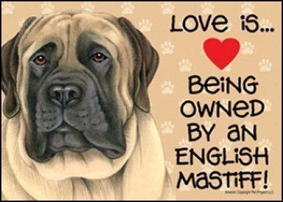 Mastiffs image by Alexandria Sweeney on Puppy stuff