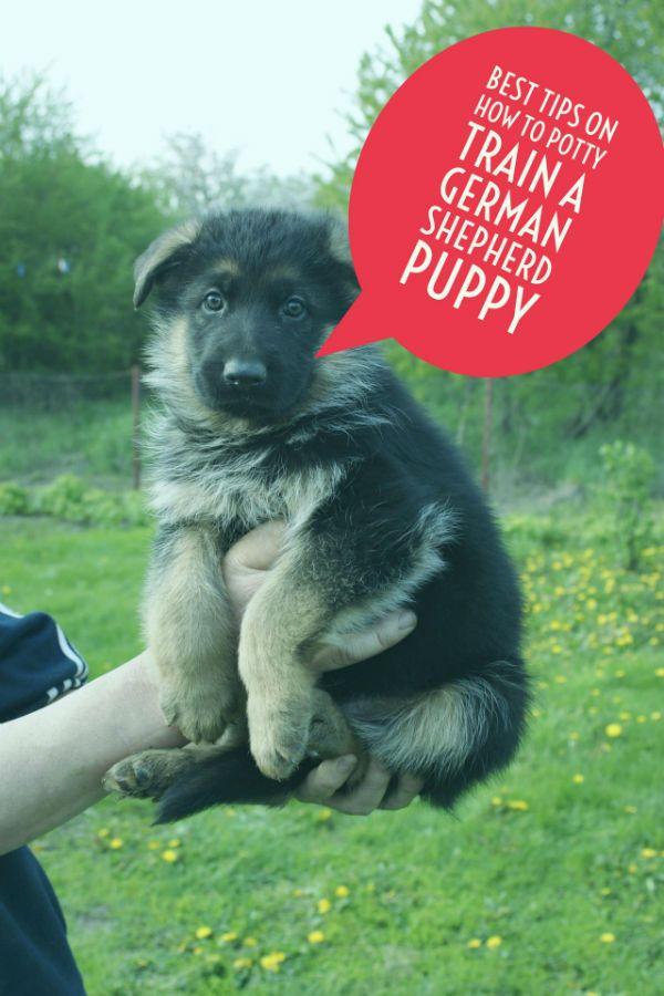 Best Tips On How To Potty Train A German Shepherd Puppy German