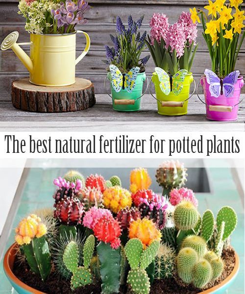 The best natural fertilizer for potted plants   Lawn and