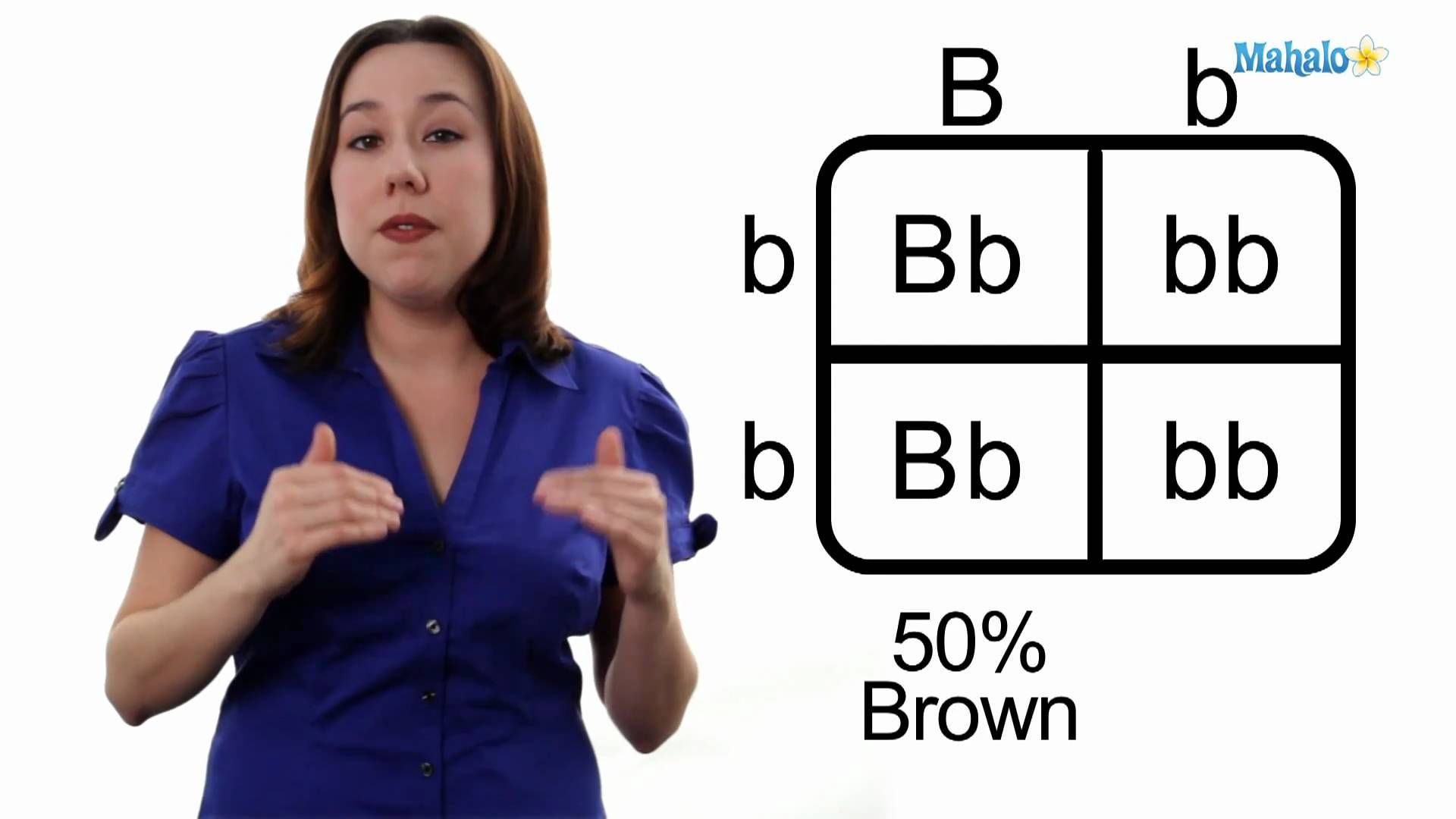 How To Draw A Punnett Square