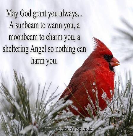 Cardinal Prayer | Christian posters | Cardinal birds, Bible