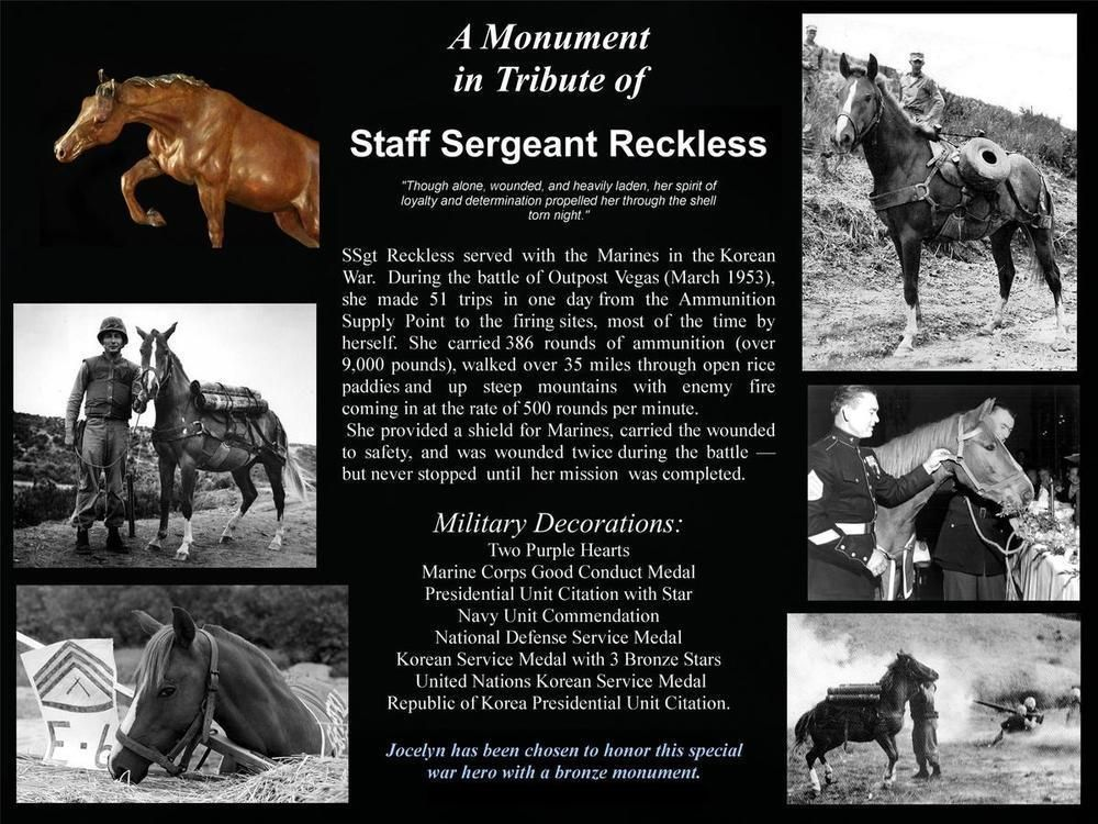 Image result for Sergeant Reckless pictures of the horse
