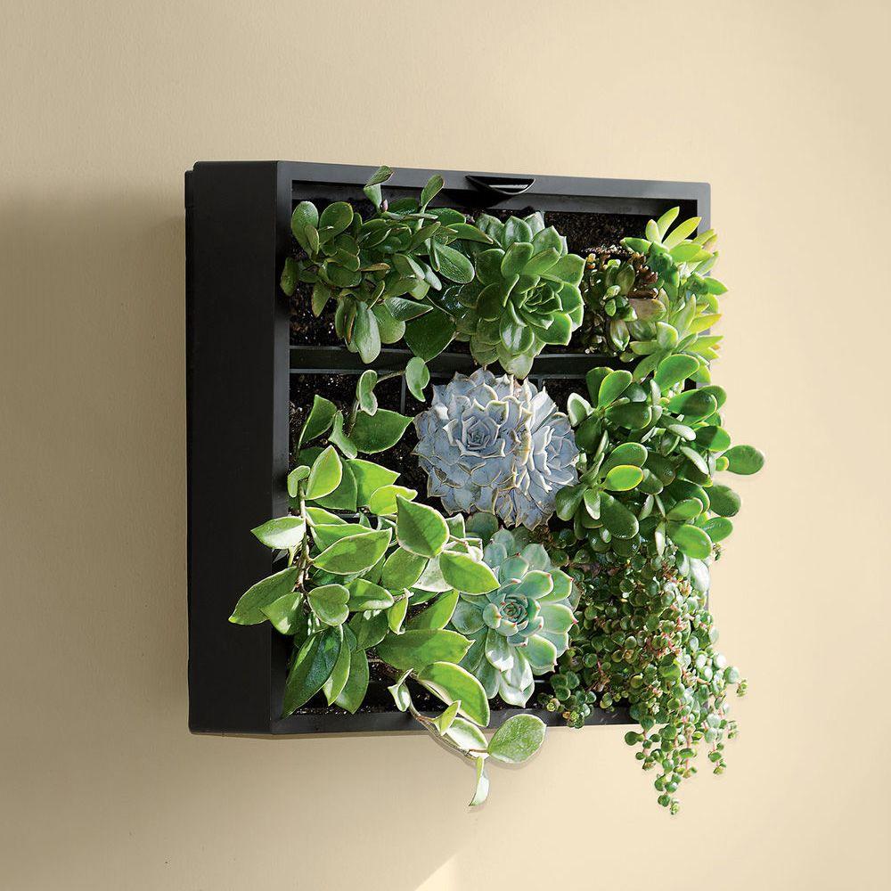 Living Wall Art living art green wall / tabletop planter | green walls, living
