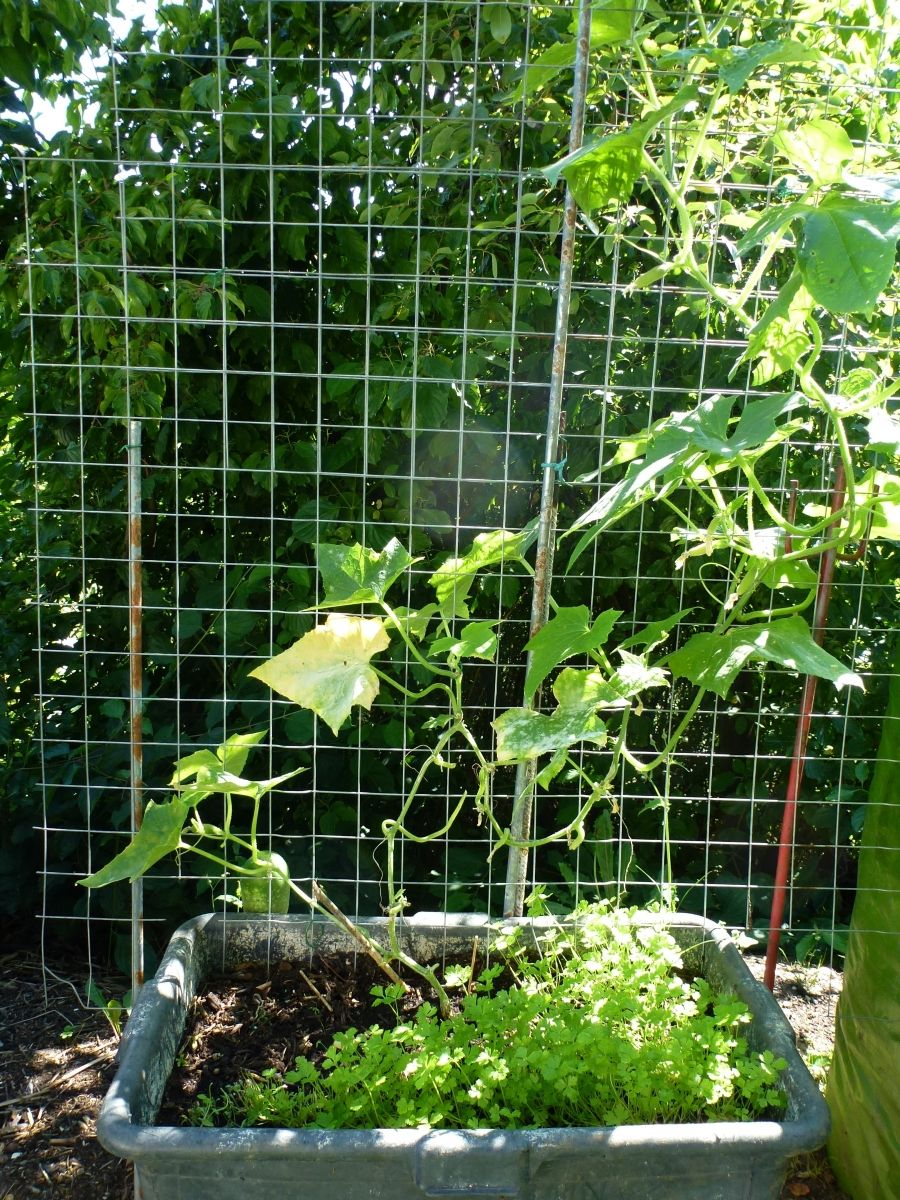 rankgitter aus estrichmatten selber bauen | pflanzen | garden plants