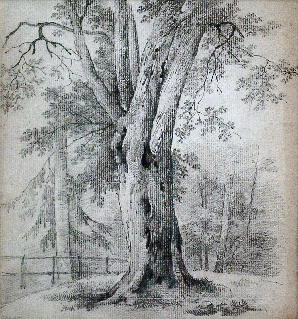 привлекательный, дерево рисунок графика картинки видео про