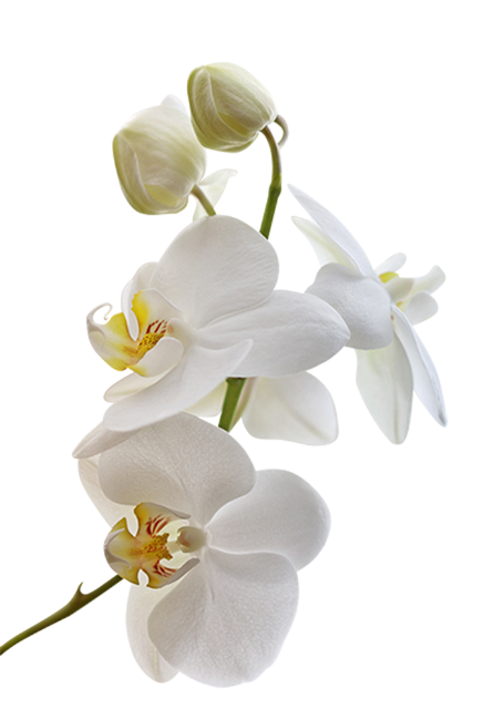 Tubes Fleurs Brances Fleuries Page 2 Fleur Orchidee Orchidee Orchidee Blanche