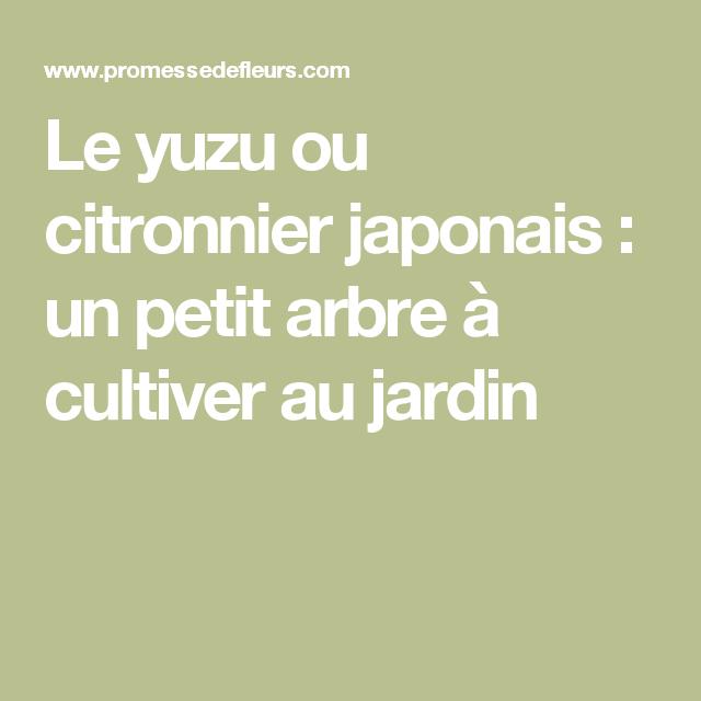 le yuzu un citronnier japonais tr s recherch. Black Bedroom Furniture Sets. Home Design Ideas