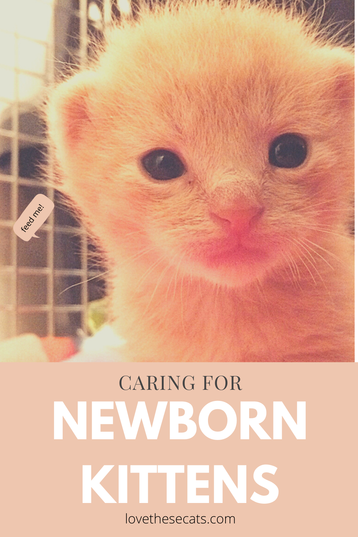 How To Care For Newborn Kittens In 2020 Newborn Kittens Kittens Baby Kittens