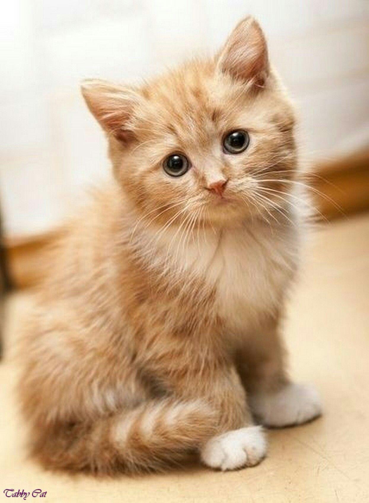 Kitten Kittens Cutest Cute Animals Cute Cats