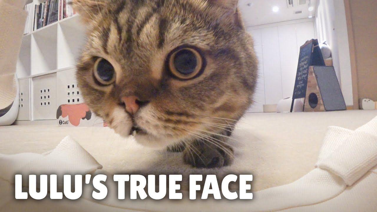 Lulu S Hidden Second Nature Kittisaurus Youtube In 2020 Pet Dogs Animals Pets