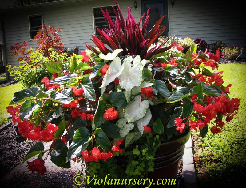 Pin By Viola Nursery And Greenhouse On Containers For Sun Flower Pot Garden Flower Garden Flower Pots