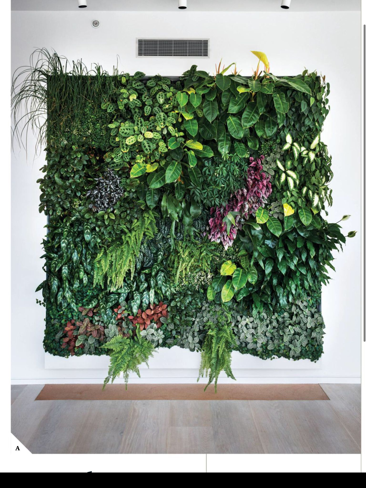 Living Plant Wall Indoor Plant Wall Garden Wall Vertical