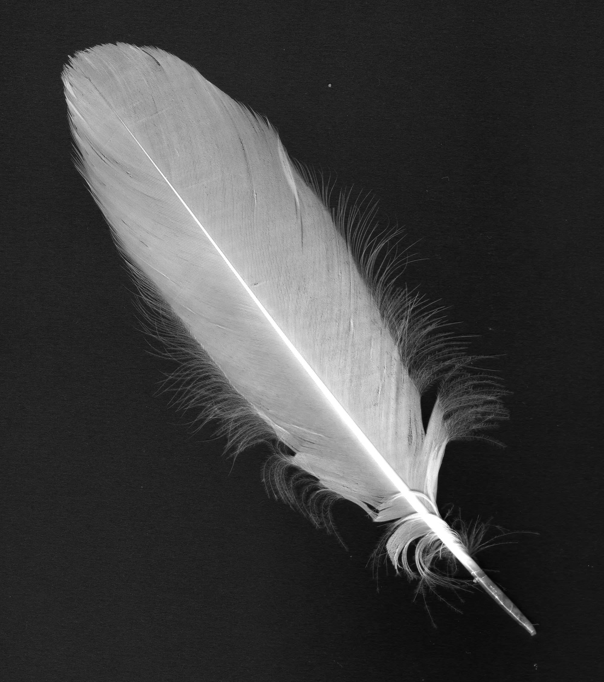 Feather Art Crafts