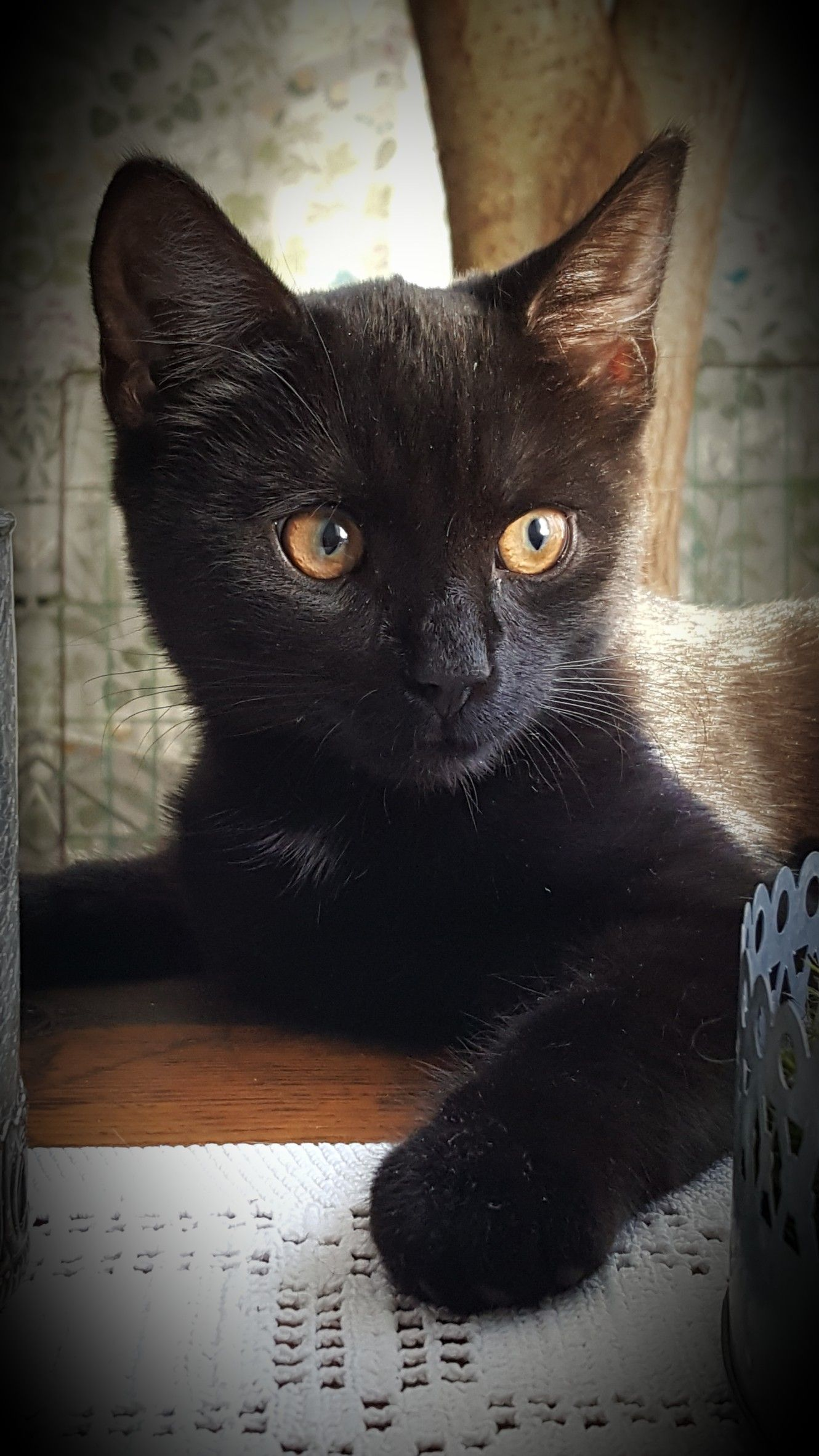 Black Kitten With Golden Eyes Baby Black Cat Cats Cats And Kittens