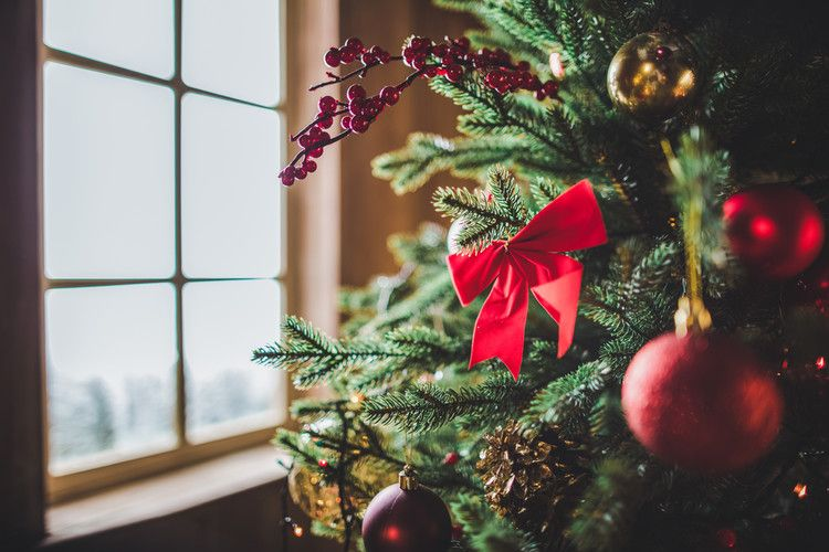 How to keep a Christmas tree fresh for as long as possible \u2014 Popular