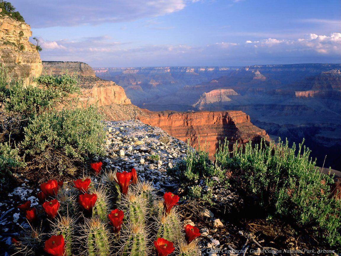 Imagen de http://www.forfreeimages.com/imagenes/paisajes/paisajes_g/Canon_del_Colorado.jpg.