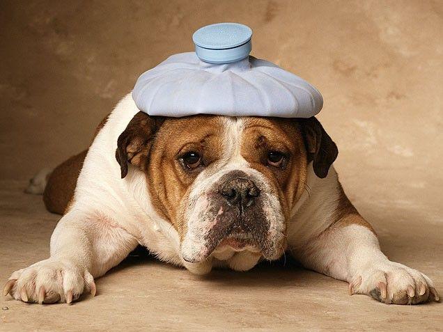 Resultado de imagen de perro de ressaca
