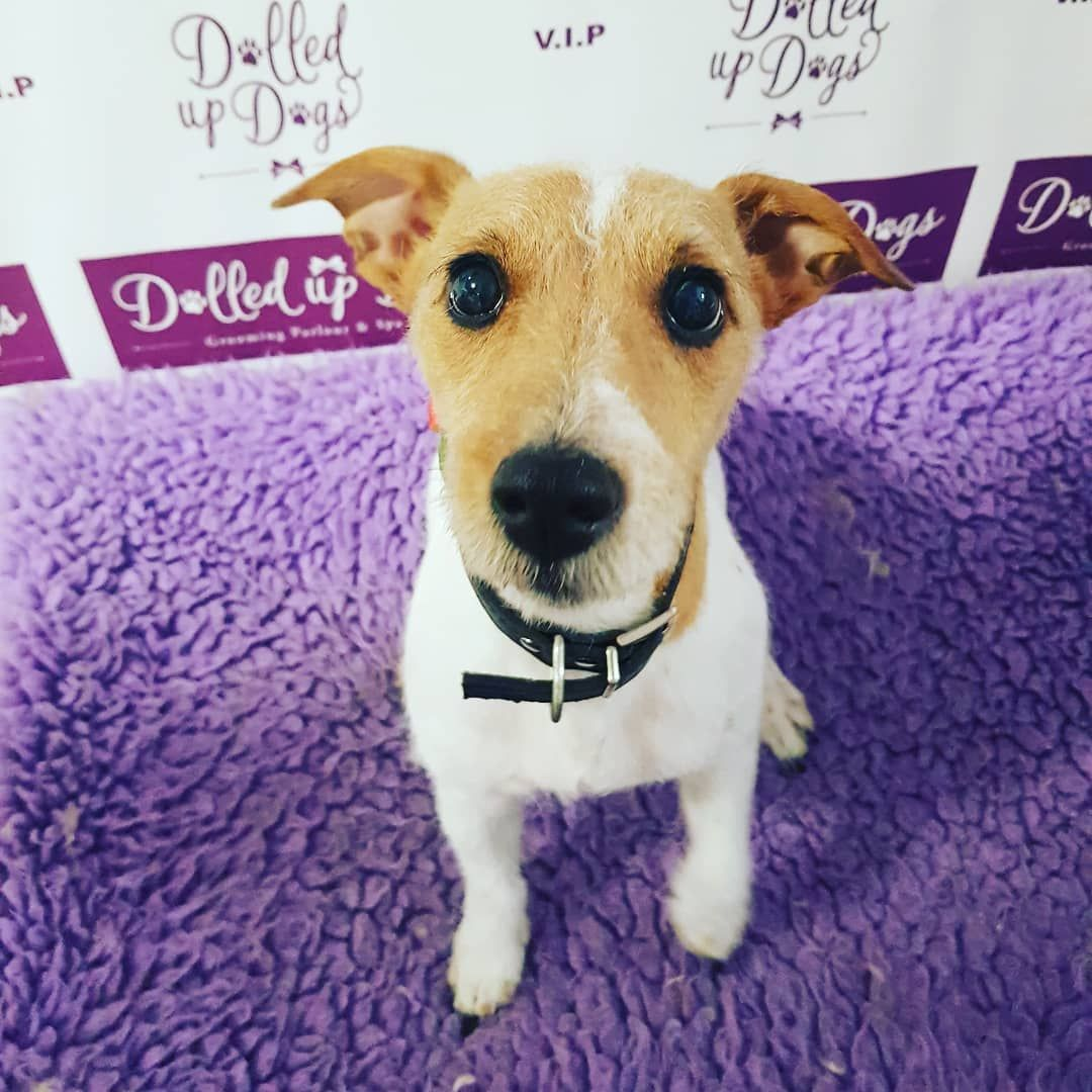 New The 10 Best Home Decor With Pictures Chase After His Pamper Today Dolledupdogs Dolledup Dolledupdogsgrooming Re With Images Puppy Lover Dog Spa Dog Lovers