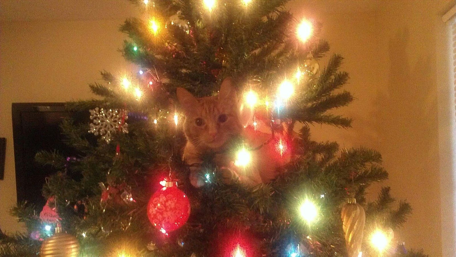 Keep your cat out of your Christmas tree using a simple