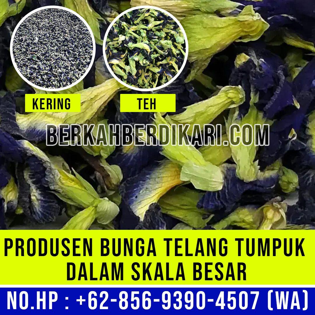 Perusahaan Bunga Telang Kering Skala Besar Supplier Kembang Telang 62 856 9390 4507 Wa In 2020 Bunga