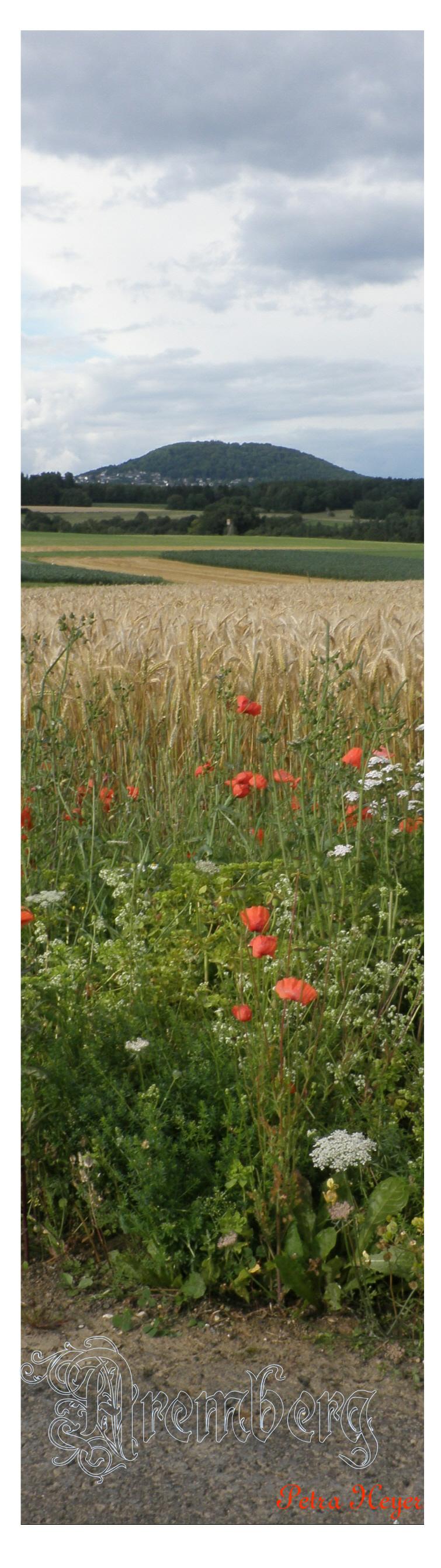 Der Aremberg in der Eifel. Das Getreide ist fast reif und der Klatschmohn blüht.