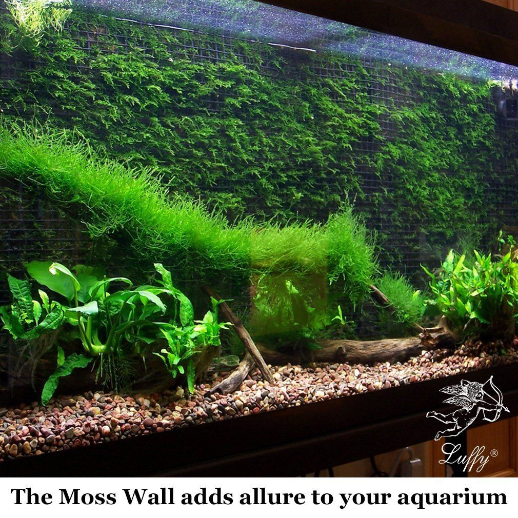 Amazon Com Decorative Luffy Aquatic Moss Wall Floor Mesh Kit Create A Lush Living Plant Moss Wall Or Moss Fish Tank Plants Fresh Water Fish Tank Fish Tank