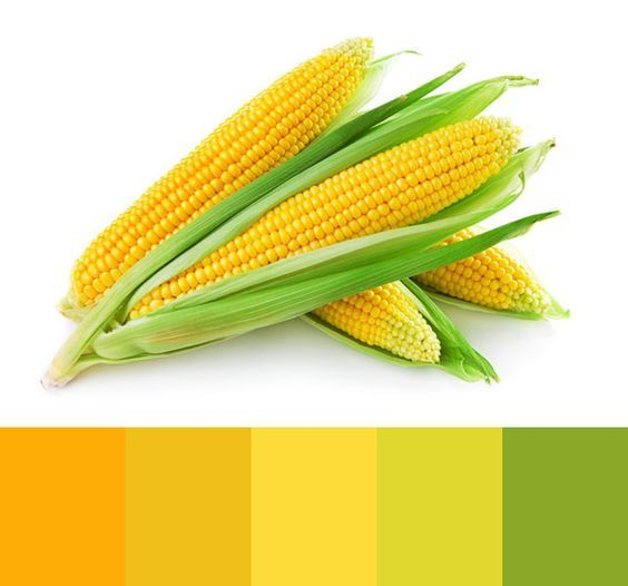 Yellow corn color palette