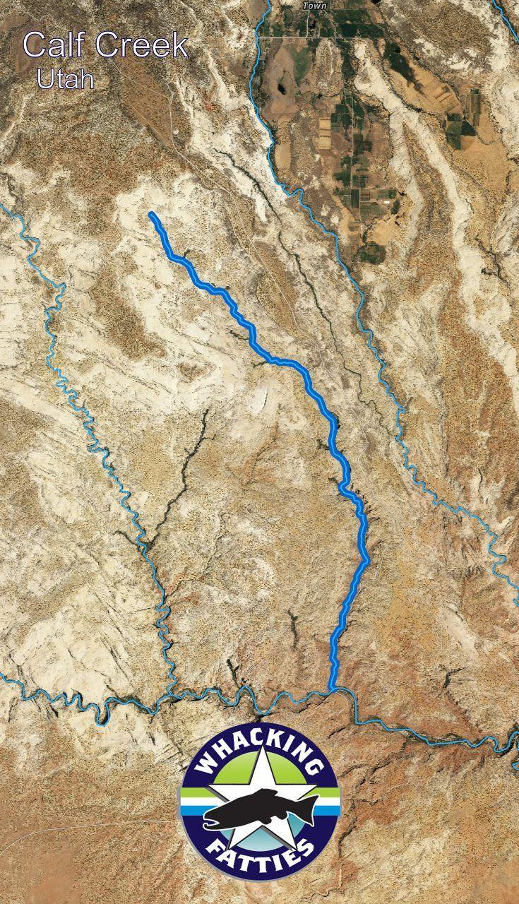 Calf Creek Fishing Report | Fishing report, Utah fishing