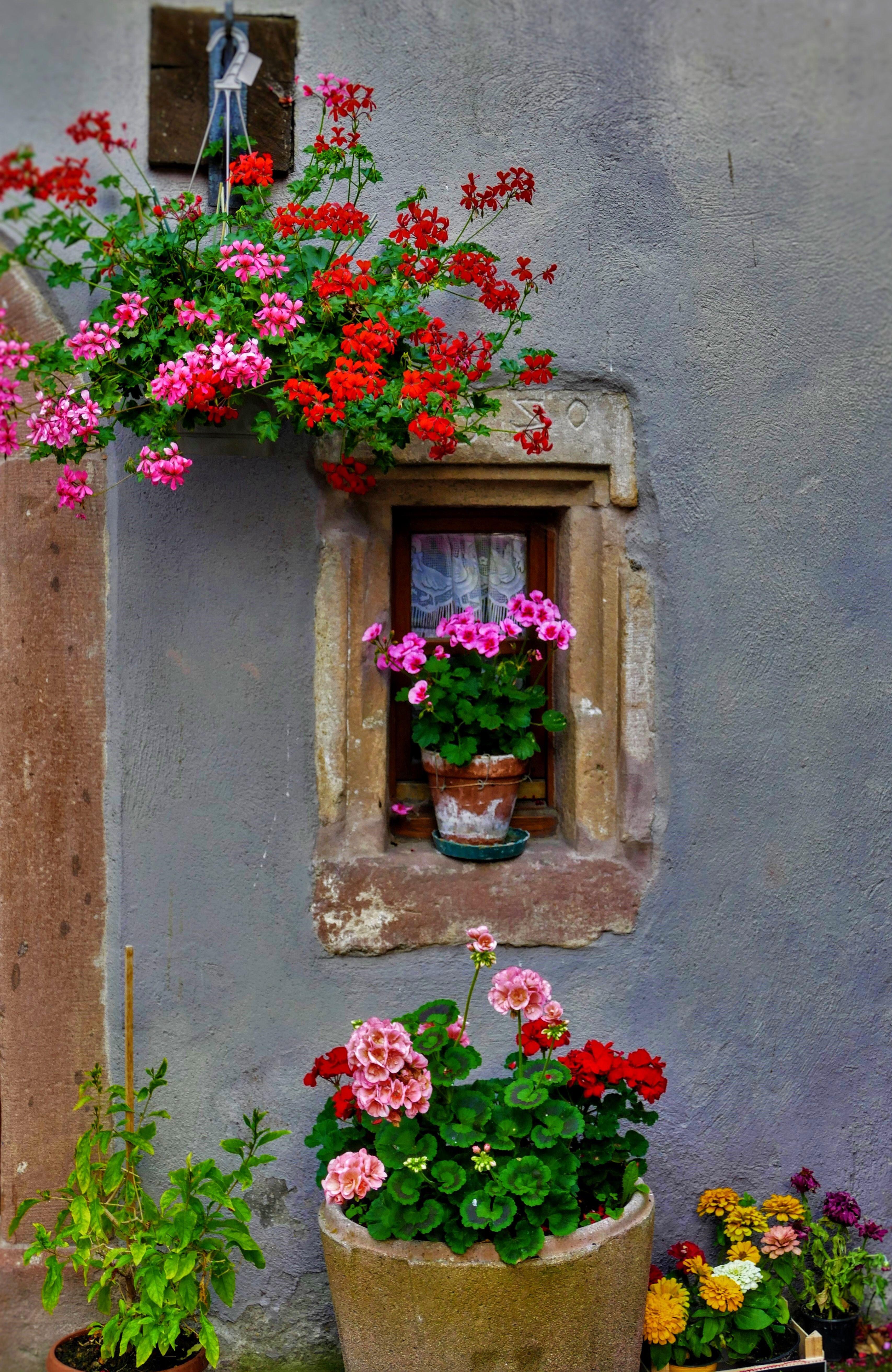 Hunawihr france puertas y ventanas en acuarela for Puertas para jardin