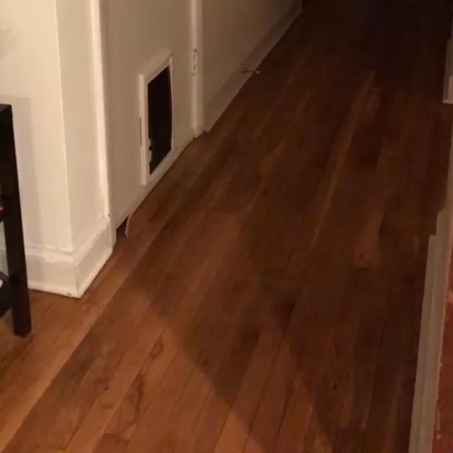 Beautifull cats videos