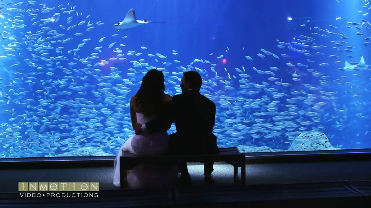 Lauren + Alec's Feature Film | The Florida Aquarium | Tampa, FL