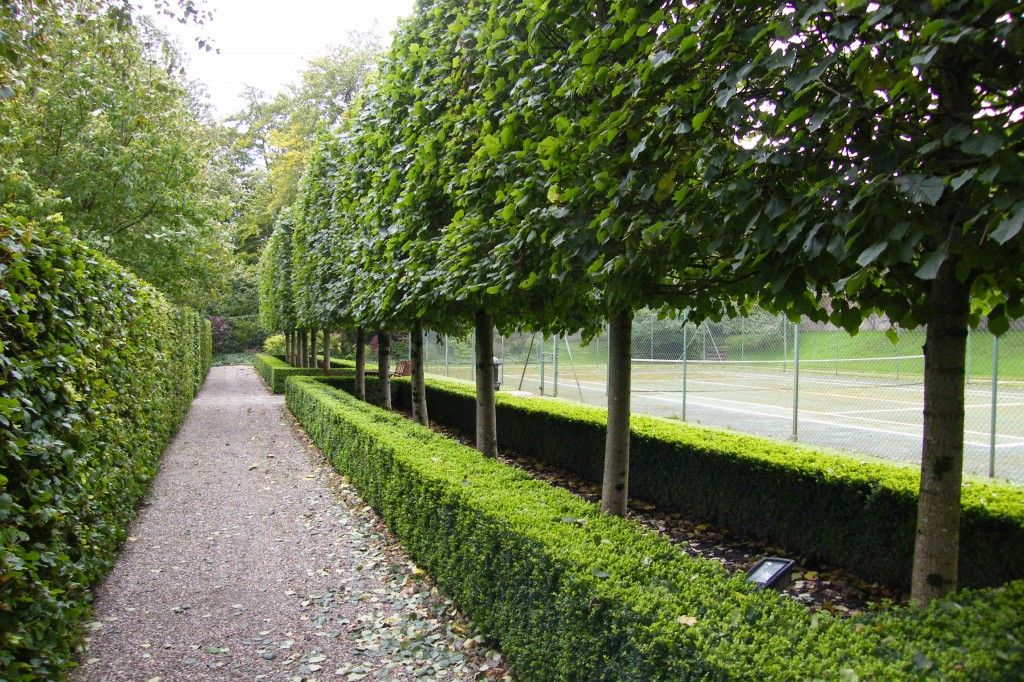 special trees for landscape design
