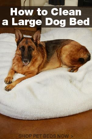 5 Steps To Clean A Large Dog Bed Overstock Com Dog Bed Large Dog Bed Large Dogs