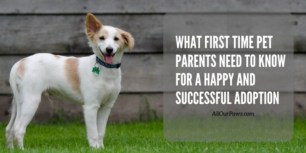 What First Time Pet Parents Need To Know For A Happy And Successful Adoption Pet Parent Pet Health Pets
