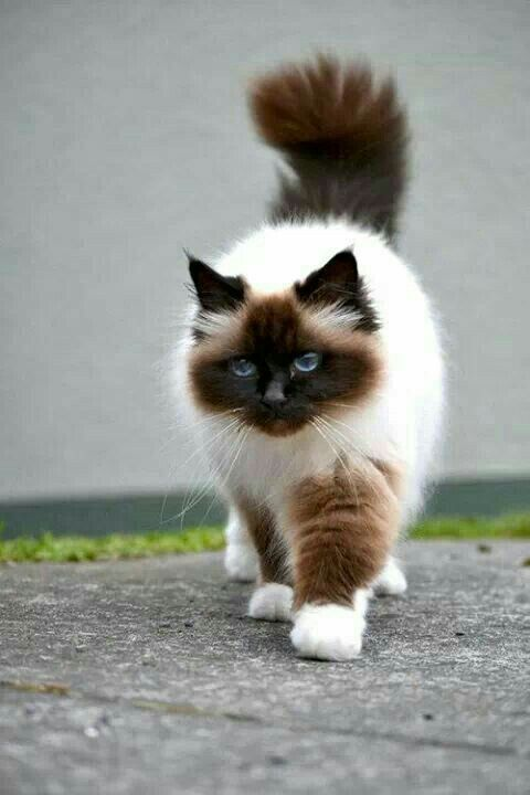 UN gatto bellissimo