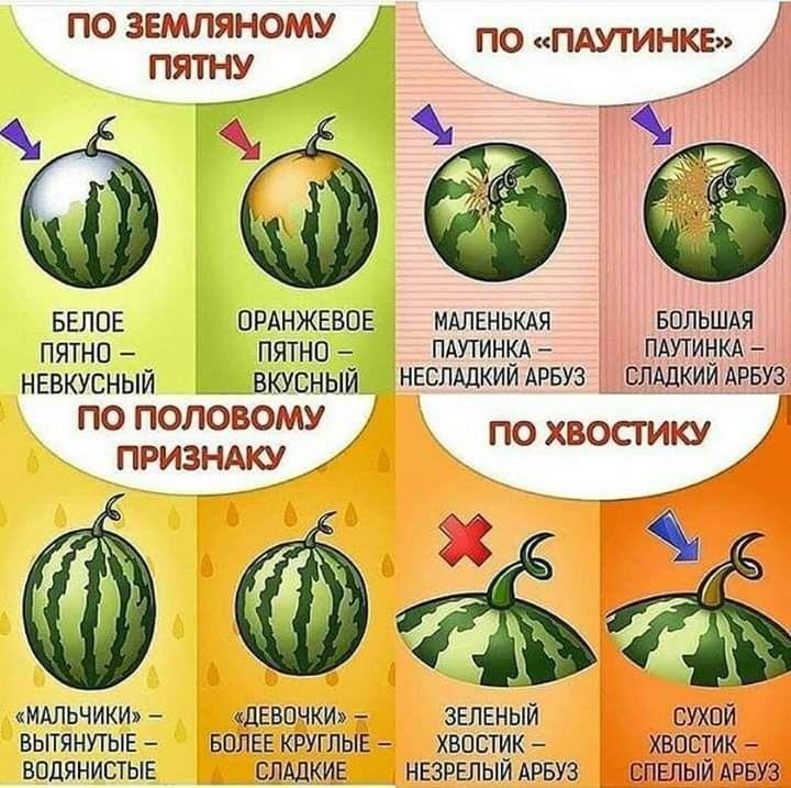 Подробное описание как выбирать вкусный и сладкий #арбуз ...