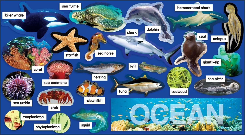 Ocean Plants & Animals Mini Bulletin Board 10