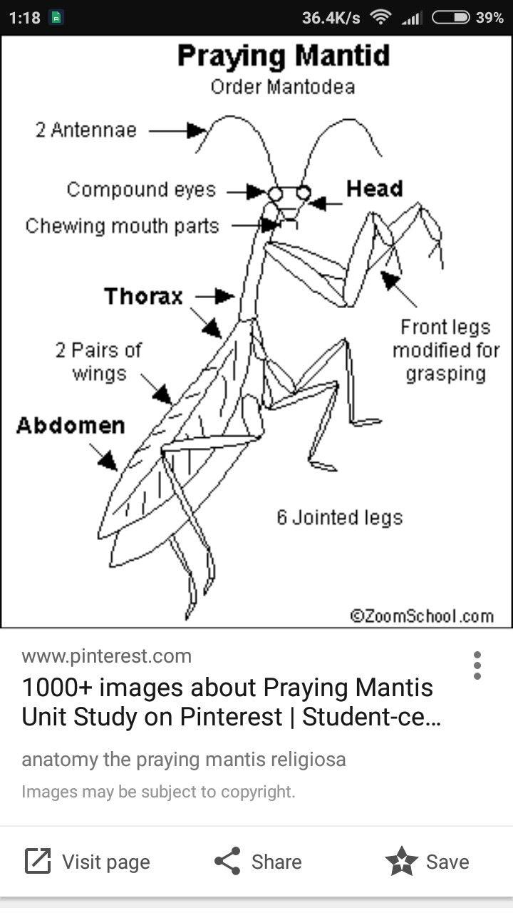 Pin by m m on Praying Mantis | Pinterest | Praying mantis ...